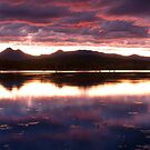 Plum Beautiful -Moogerah Dam by Beth  Wode