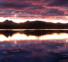 Plum Beautiful -Moogerah Dam by Beth  Wode