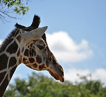 Giraffe by marycarnahan