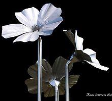 Flax Flowers by John Darren Sutton