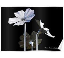 Flax Flowers Poster