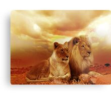Lions At Sunset Metal Print