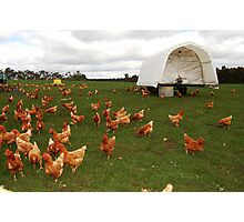 Happy Chickens (the life that all chickens deserve to live) Photographic Print