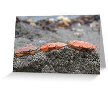 Crab Heads Greeting Card