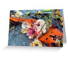 Sea Plants Greeting Card