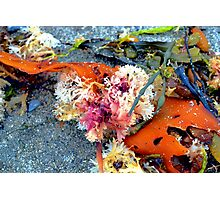 Sea Plants Photographic Print