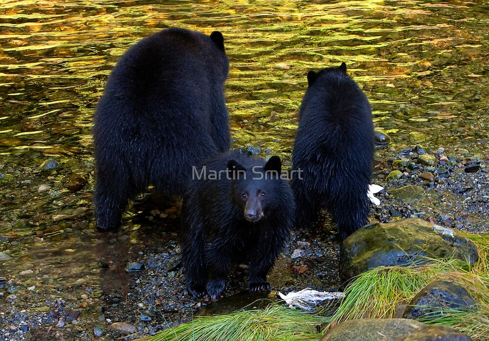 """""""Hey mom, someone's taking our photograph!"""" by Martin Smart"""