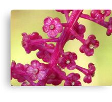 Poke Flower Canvas Print
