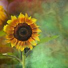 Artsy Sunflower by john forrant