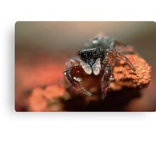 jumping spider & water ball Canvas Print