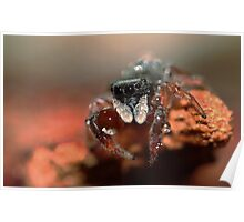 jumping spider & water ball Poster