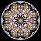 Dazzling Dahlias ball 2 by Matthew Walmsley-Sims