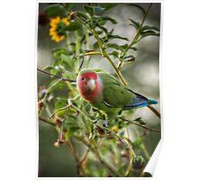 Lovely Little Lovebird  Poster