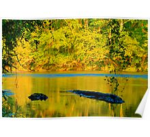 HDR - River and Logs Poster
