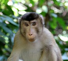 Long-tailed Macaque 1 by MrMarth