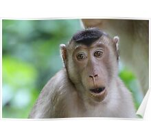 Long-tailed Macaque 2 Poster