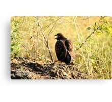 Dark Red Tail Cry Canvas Print