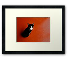 Cameroon Cat Framed Print