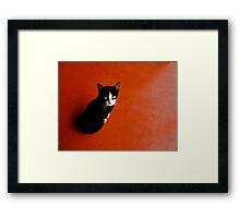 Cameroon Cat Framed Print