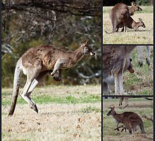 Kangaroos by shortshooter-Al