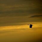 Coastal sky and heron by Al Williscroft