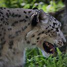 Stalker by Sean Jansen