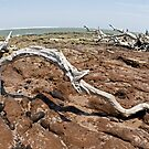 Driftwood at Talbot Island by Glennis  Siverson