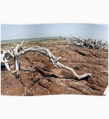 Driftwood at Talbot Island Poster