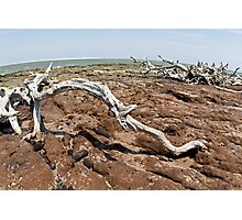 Driftwood at Talbot Island Photographic Print