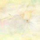 clouds of petals by Teresa Pople