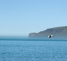 Johnathan Livingstone Seagull by beachbumma