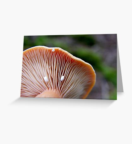 Milk Cap Mushroom (Lactarius) Greeting Card