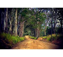 Booie Bush Road Photographic Print