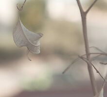 the Cinematic Leaf - II by Omar Al Nimer