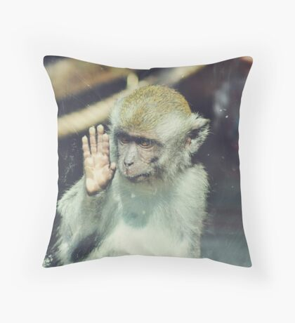 Monkey at the Curragh's Wildlife Park Throw Pillow