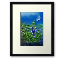 """Wild Lupin"" Framed Print"