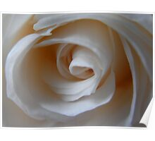 Close to the White Rose Poster