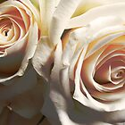 A Pair of White Roses by lissygrace