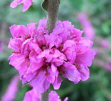 Pretty in Pink by lissygrace