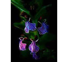 Fractal Lilac Elegy Photographic Print