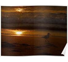 (Sunset Series ~1)  Seagull On Board Poster