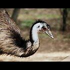 Emu by Melanie  Barker