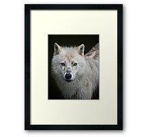Portrait of an Arctic Wolf Framed Print