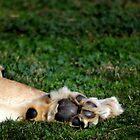 Lion Paws by Melanie  Barker