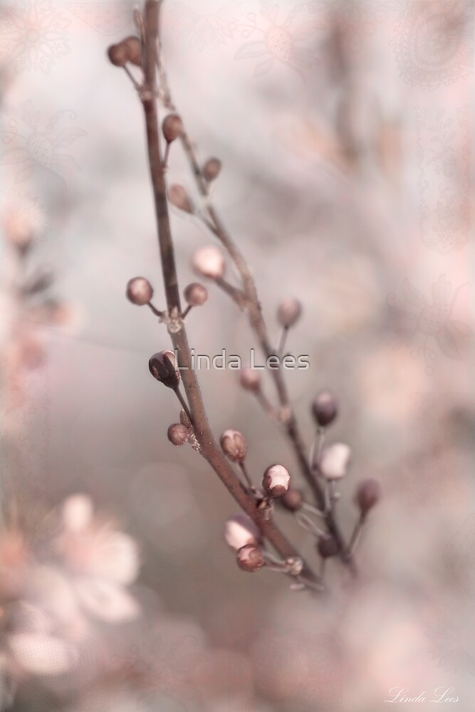 Pretty in Pink by Linda Lees