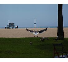Flight Of A Seagull Photographic Print