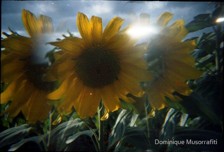 A piece of Sun by Dominique Musorrafiti