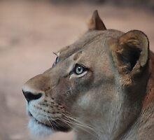 Lion by Melanie  Barker