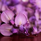 Wisteria On Top Of A Desk by Evita