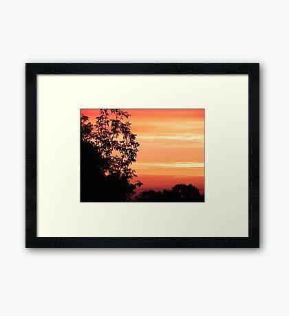Nature's Paint Brush © Framed Print